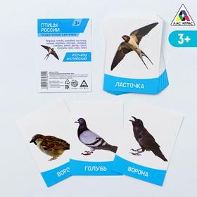 Обучающие карточки «Изучаем английский. Птицы России», 16 штук, 3+