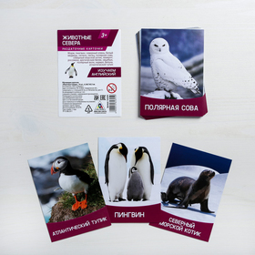 Обучающие карточки, английский язык «Животные Севера», 16 шт. Ош