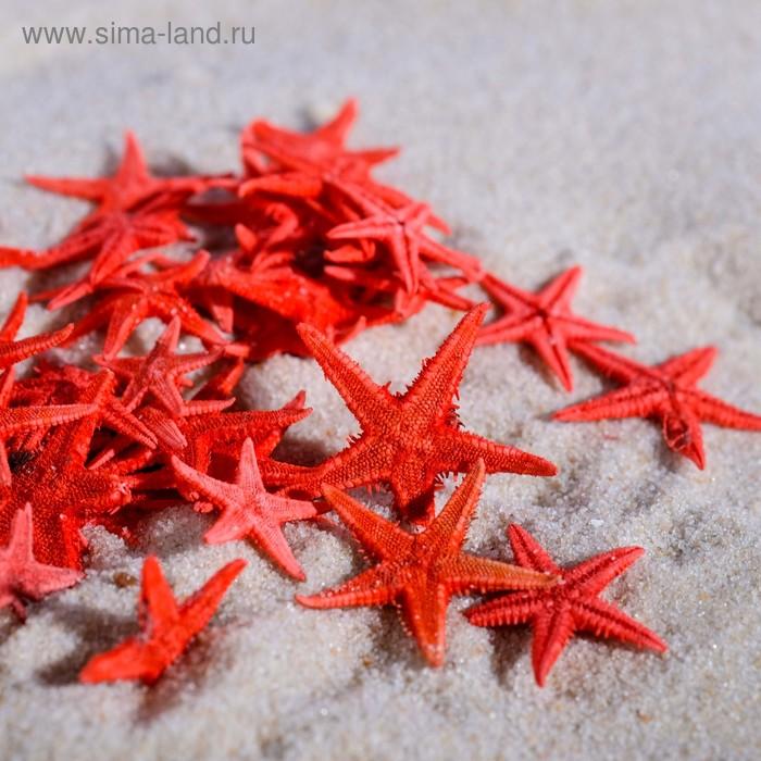 Набор натуральных морских звезд, 1,5-2 см, 40 шт