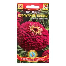 """Семена цветов Цинния """"Пурпурный принц"""", О, 0,3 г"""