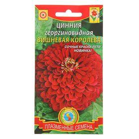 """Семена цветов Цинния георгиновидная """"Вишневая королева"""", О, 0,3 г"""