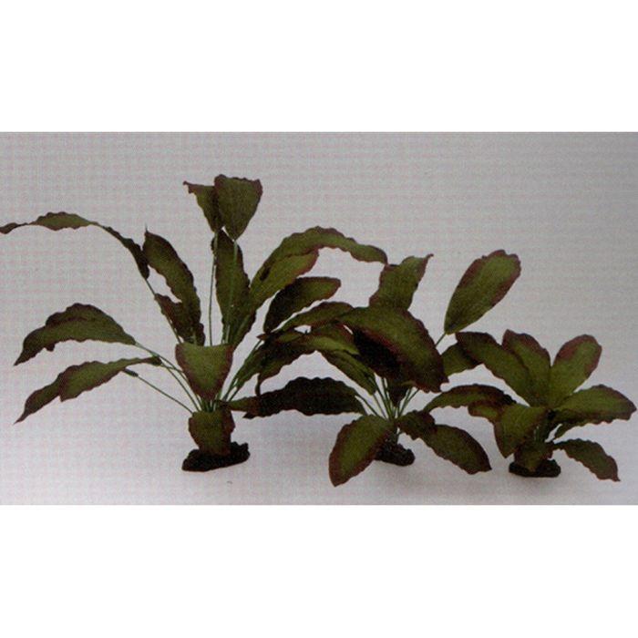 Шелковое растение  PRIME Эхинодорус Розеа 13см