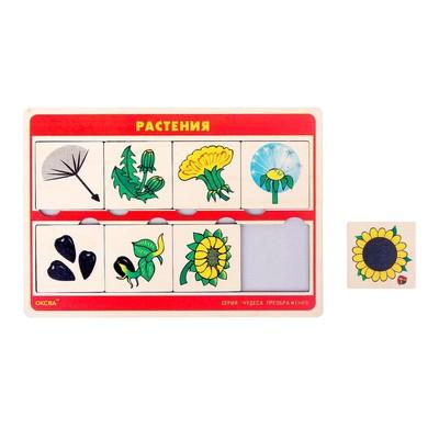 """Рамка-вкладыш """"Чудеса преображений: растения"""" - Фото 1"""