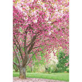 Фотообои К-127 «Цветущая сакура» (4 листа), 140 × 200 см Ош