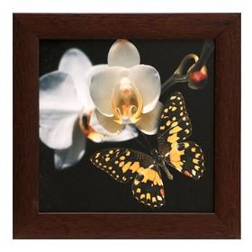 Картина 'Орхидея с бабочкой' Ош