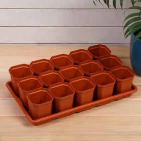 Набор для рассады: стаканы по 300 мл (15 шт.), поддон 41 × 25 см, МИКС Ош