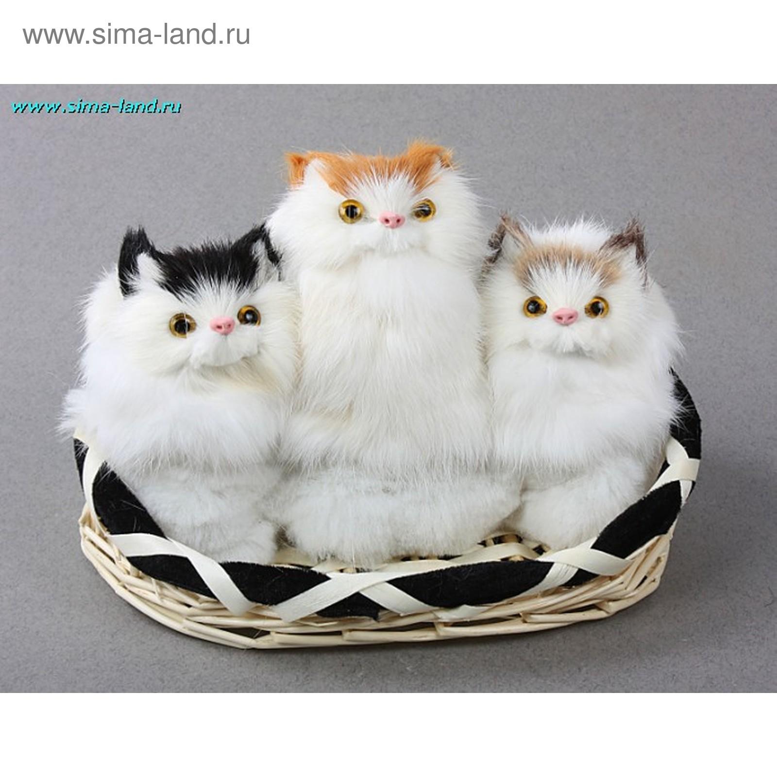Кошки-подружки