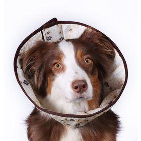 Ветеринарный елизаветинский воротник OSSO, М (обхват шеи 40-48 см), микс Ош