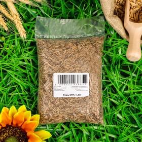 Семена Рожь, 0,3 кг Ош