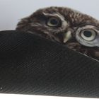 Коврик для мыши Defender Wild Animals 220x180x2 мм, МИКС - Фото 2
