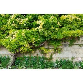 Фотобаннер, 300 × 160 см, с фотопечатью, «Лиана» Ош