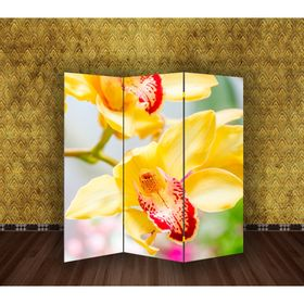 Ширма 'Орхидеи', 160 × 150 см Ош