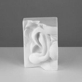 Гипсовая фигура, ухо Давида левое «Мастерская Экорше», 16 х 14 х 24,5 см Ош