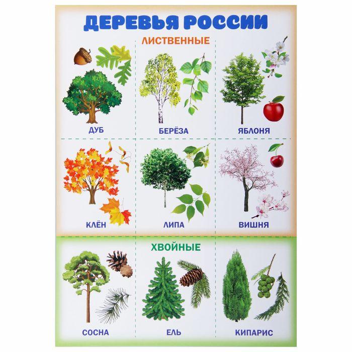 Картинки лесных деревьев для детей с названиями