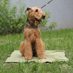 Охлаждающий коврик для собак OSSO, 75 х 100 см Ош