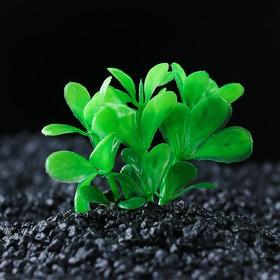 Растение искусственное аквариумное малое, 6 см Ош