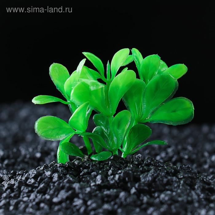 Растение искусственное аквариумное малое, 6 см