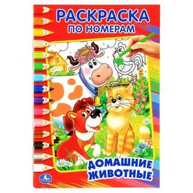 Раскраска по номерам «Домашние животные», Умка