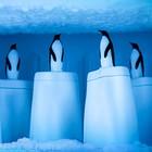 Форма для эскимо Penguin On Ice - Фото 4