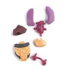 Научный опыт «Строение тела» - Фото 7