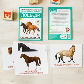 Обучающие карточки по методике Г. Домана «Лошади», 10 карт, А6