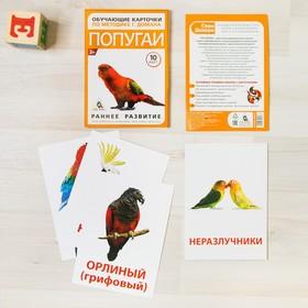 Обучающие карточки по методике Г. Домана «Попугаи», 10 карт, А6