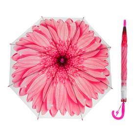 Зонт-трость «Гербера», полуавтоматический, со свистком, R=41см, цвет розовый Ош
