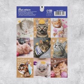 Наклейки «Замуррчательные котики», 11 × 16 см Ош