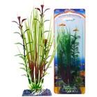 Растение-композиция PENN-PLAX HAIRGRASS-BLOOMING LUDWIGIA, 20см