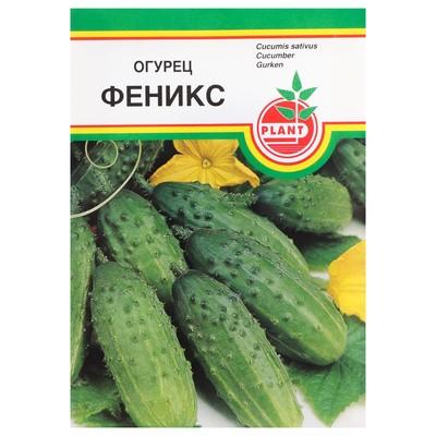 """Семена Огурец """"Феникс"""", пчёлоопыляемый, 10 шт - Фото 1"""