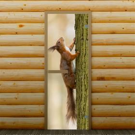 Дверь для бани и сауны 'Белка на дереве', 190 х 70 см, с фотопечатью 6 мм Добропаровъ Ош