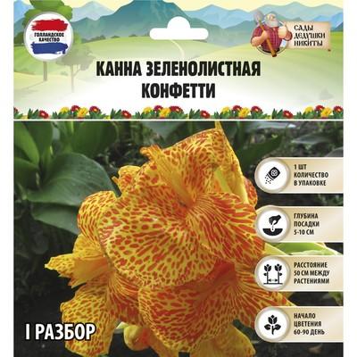 "Канна зеленолистная  ""Конфетти"", р-р I, 1 шт"