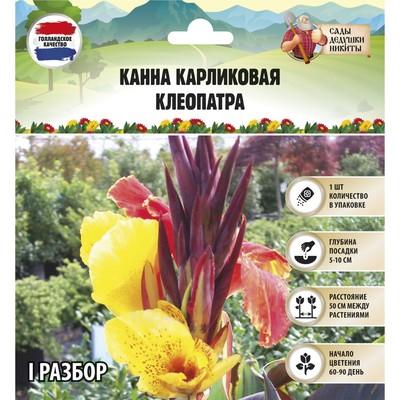 """Канна Карликовая """"Клеопатра"""",  р-р I, 1 шт"""