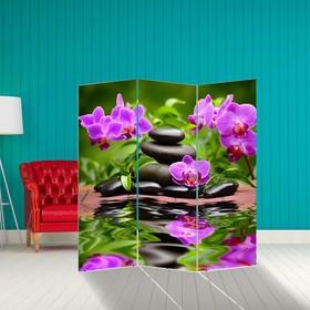 Ширма 'Орхидеи. Гармония', 160 × 150 см Ош
