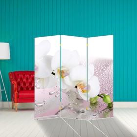 Ширма 'Орхидея и капли воды', 160 × 150 см Ош