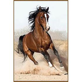 Алмазная мозаика «Дикий конь», 23 цвета