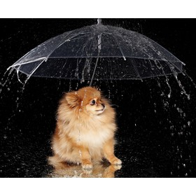 Зонт для животных 'Дружок', d=76 см Ош