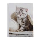 Фотоальбом на 36 фото 10х15 см Pioneer Puppies and kittens котенок