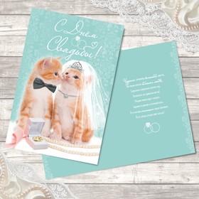 Открытка свадебная 'Милые котики' 12 х 18 см Ош
