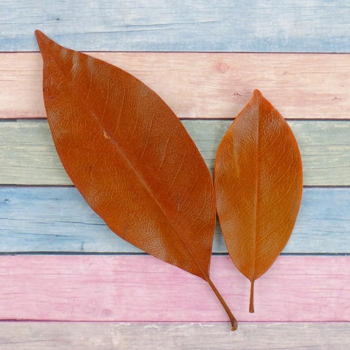 Сухие листья, (набор 2 шт), размер 1 шт: 14,5×5 см, цвет коричневый