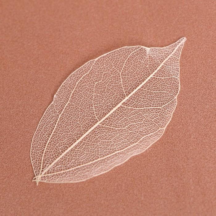 Открытка со скелетированным листом
