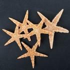 Набор из 5 морских звезд, размер каждой 3-5 см