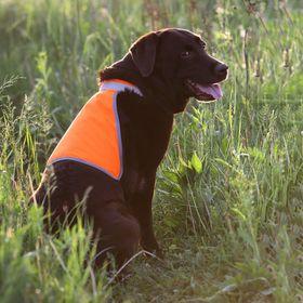 Сигнальный жилет для собак OSSO, 55 (ДС 31 см), микс цветов Ош