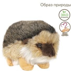 Мягкая игрушка «Ёжик», 20 см