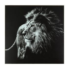 Картина 'Чёрно-белый лев' 50*50 см Ош