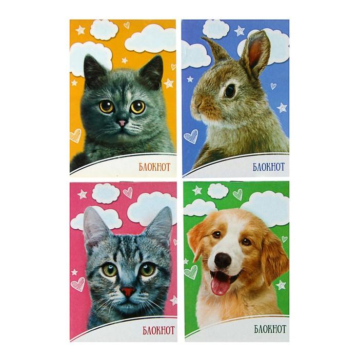 Блокнот А6, 24 листа на скрепке Домашние животные, обложка мелованный картон