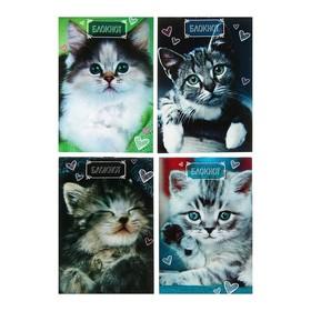 Блокнот А6, 24 листа на скрепке Calligrata «Котята», обложка картон хром-эрзац