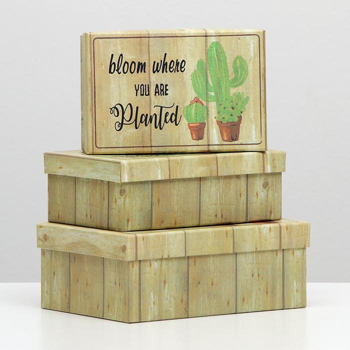 Набор коробок 3в1 Кактусы, 22 х 16 х 8.5 - 18 х 12 х 5.5 см