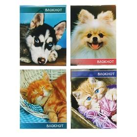 Блокнот А7, 40 листов на скрепке Calligrata «Милые животные», обложка картон хром-эрзац