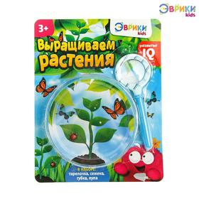 Набор для опытов «Выращиваем растение»: лупа, семена, тарелка, губка Ош